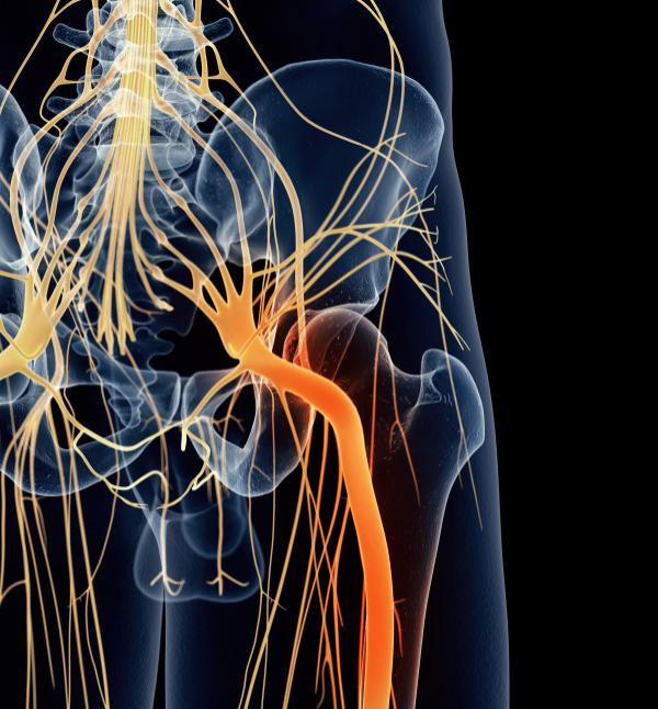 sciatica: causes, symptoms, and treatments - medical news today, Skeleton