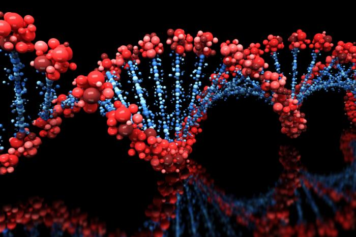Image result for photo of genes