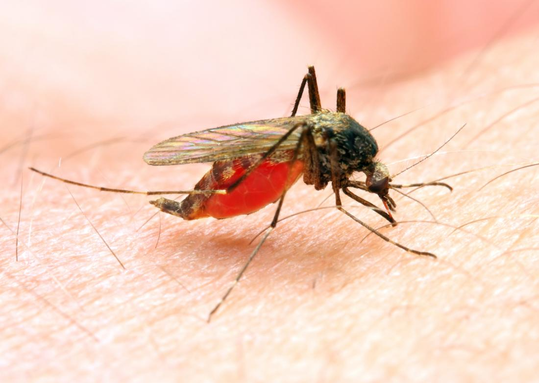 malaria: symptoms, treatment, and prevention