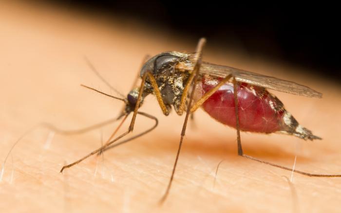info about dengue fever in urdu