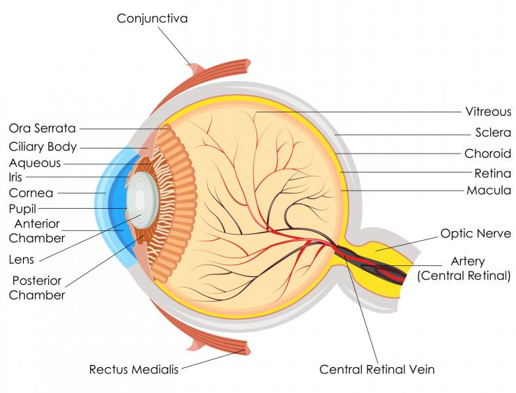 Diabetic Retinopathy Causes Symptoms And Treatments
