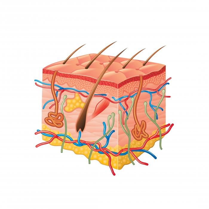 Lichen Planus: Causes, Symptoms and Treatments - Medical ...