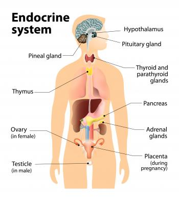 endocrinology  hormones and you   medical news today endocrine system human body diagram