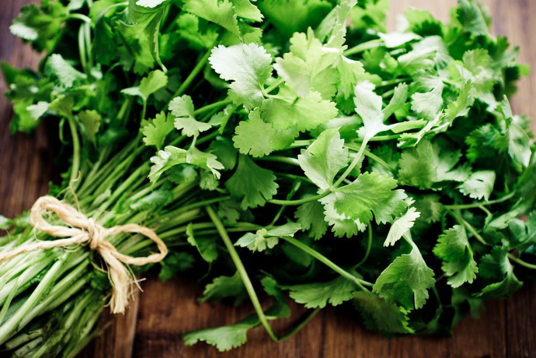 how to say cilantro in english