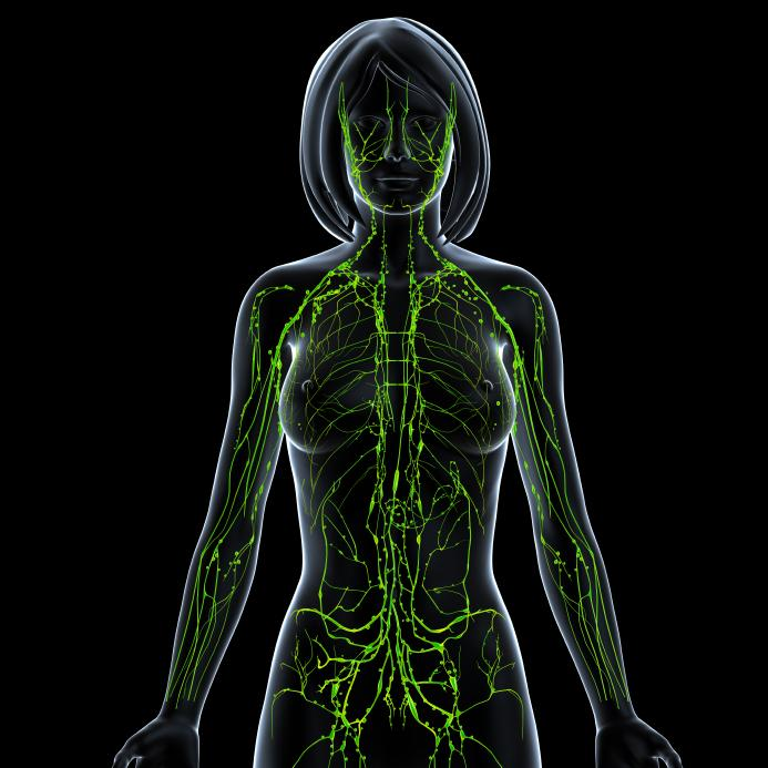 lymphatic system: facts, functions and diseases - medical news today, Muscles