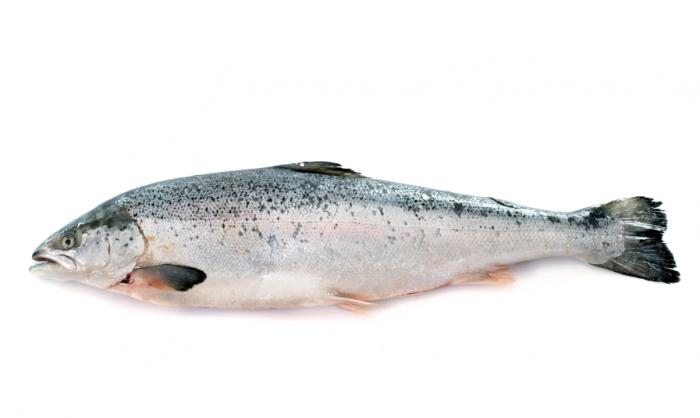 Salmon health benefits nutritional information medical for Salmon fish nutrition