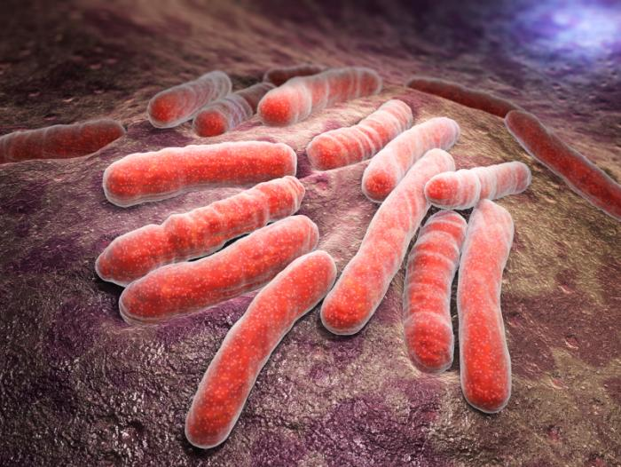 What is tuberculosis?