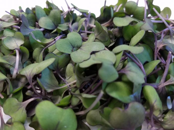 Red cabbage microgreens could reduce risk of cardiovascular disease