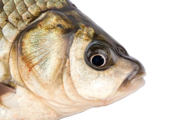 Lou gehrig 39 s disease mercury in fish seafood could be for Mercury fish pregnancy
