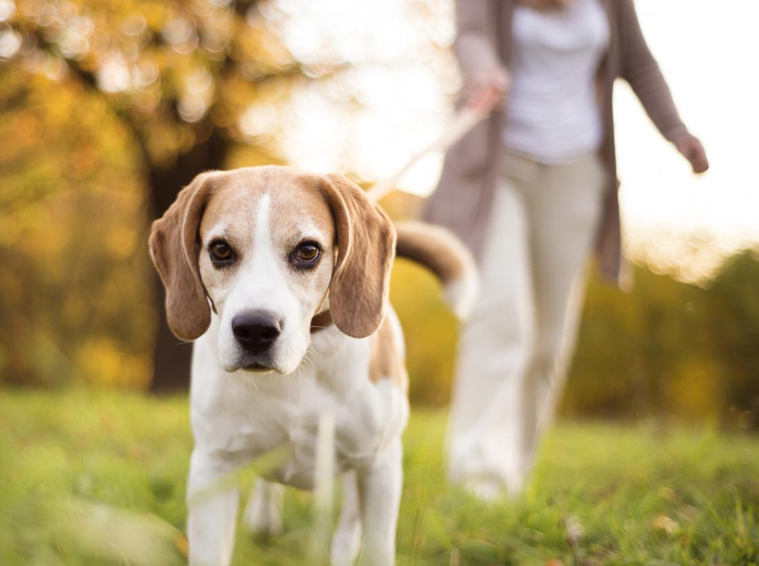 Medical News Today: Dogs: Personal trainers for older owners?