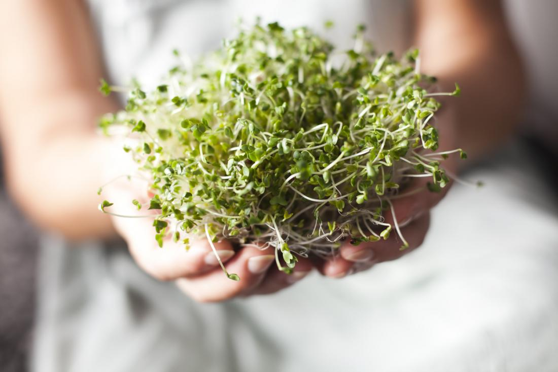 Chemical In Broccoli Sprouts May Treat >> Broccoli Sprout Extract May Help To Treat Type 2 Diabetes