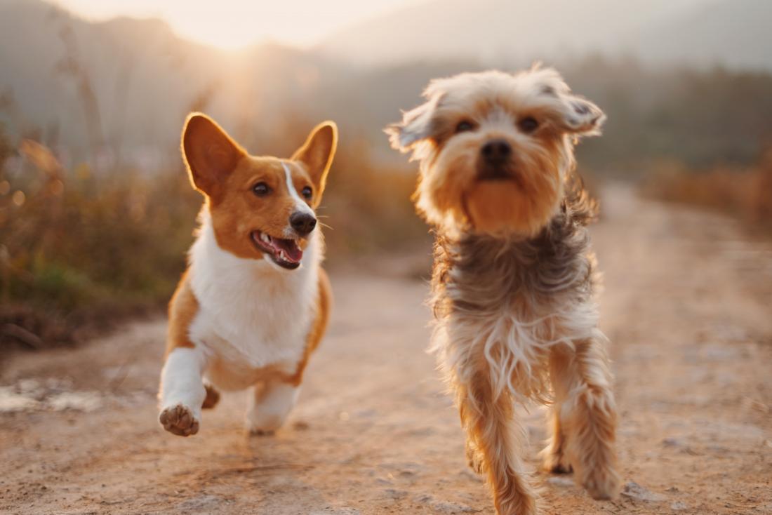 Köpekler İçin Temizleme Jelleri