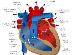 Heart disease types causes and treatments ccuart Gallery