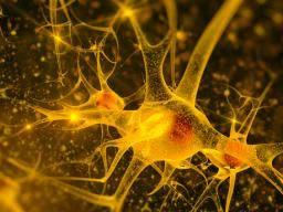 Secretos de la esquizofrenia ocultos en los pliegues del ADN