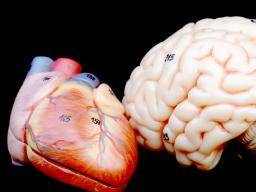 Brain patterns hold key to stress-related cardiovascular risk