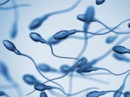 精子の健康と寿命に関する事実