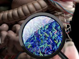 SSPT lié aux changements dans les bactéries intestinales