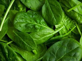 Fiber content of raw kale