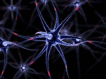 Brain's 'support cells' play active role in memory and learning