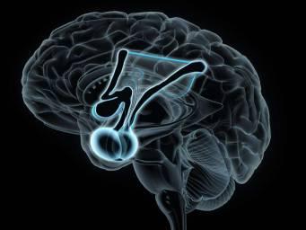 Stress-regulating brain area larger in depression, bipolar