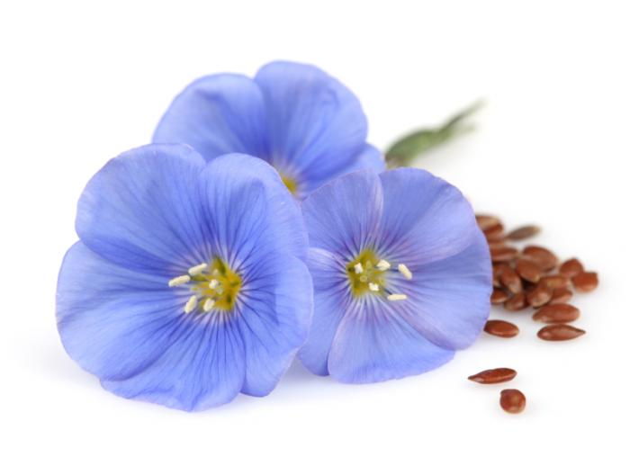 how to use flaxseed for breast growth