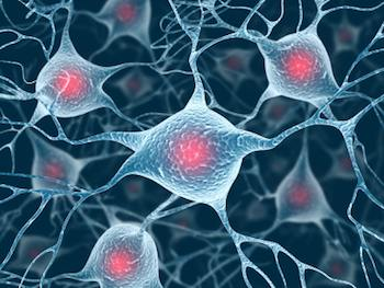 Neurons and nuclei