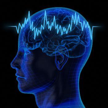 A diagram of a human brain