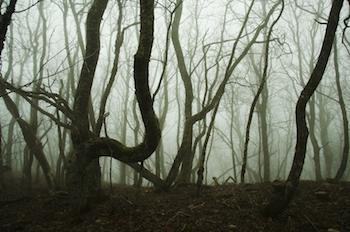 Misty forrest in the middle of Winter