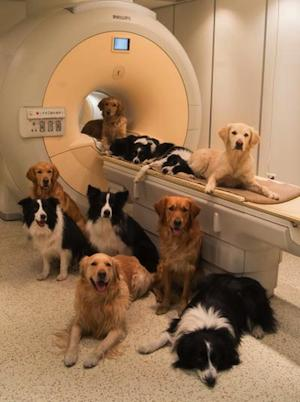 several dogs around an fRMI scanner