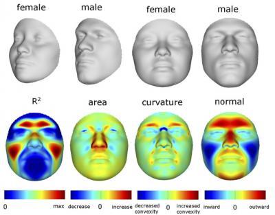 Faces Sex