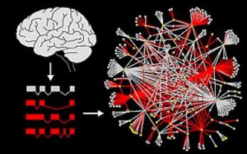 Protein Interaction Network