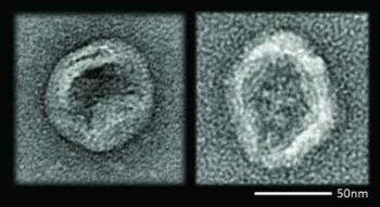 Virus vs Nanodevice