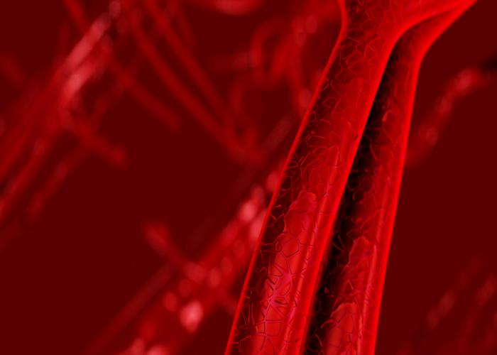Veins and arteries