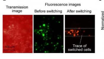 Photoswitching of Cancer Cells in Whole Blood In Vitro
