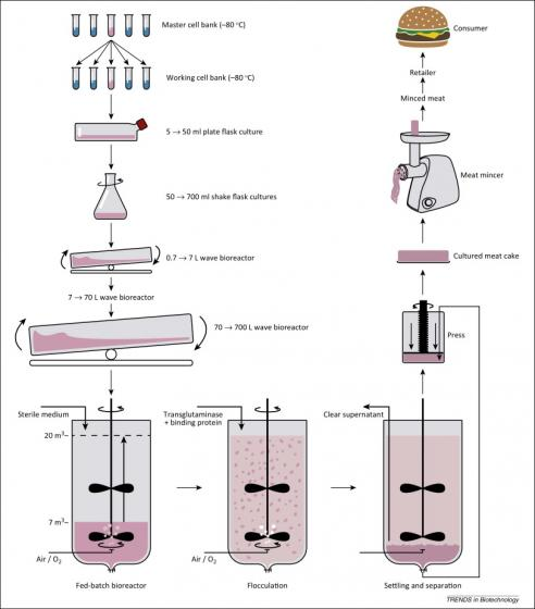 Flow Sheet of a Potential Cultured Meat Manufacturing Process