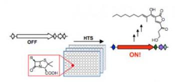 High-Throughput Strategy Activates Silent Biosynthetic Gene Clusters