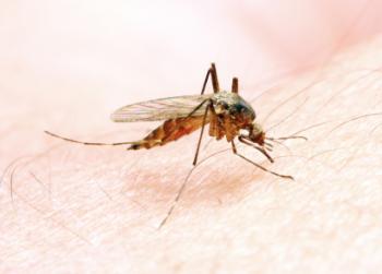 Novel antigen holds promise for malaria vaccine