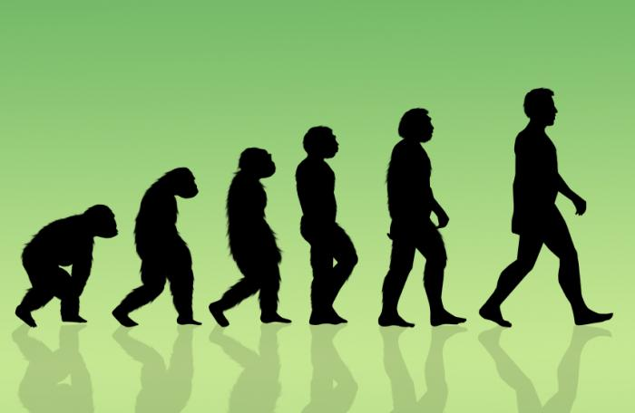 illustration depicting human evolution