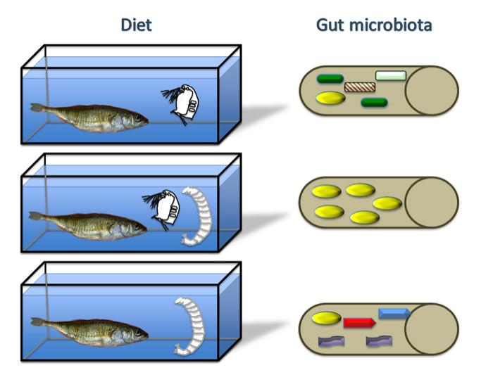 Diet and gut microbiota