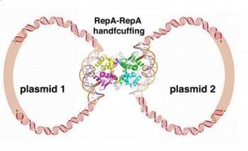 Plasmid Handcuffing
