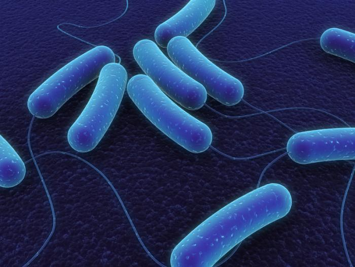 a study on genetically engineering the e coli bacteria Their method involves genetically engineering plants to produce antimicrobial proteins other types of bacteria than e coli can be killed with colicins popular science may receive financial compensation for products purchased through this site.