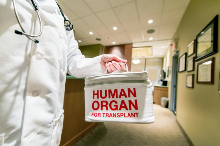Should animal organs be transplanted into humans