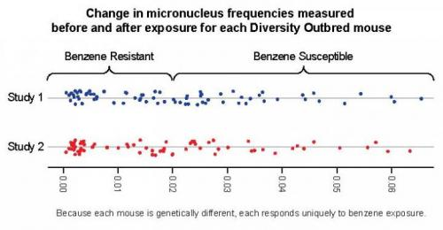 This graph shows the change in micronucleus frequencies measured before and after exposure for each Diversity Outbred mouse]