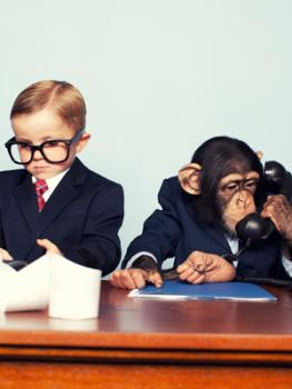 [Boy and chimp dressed in business suits]