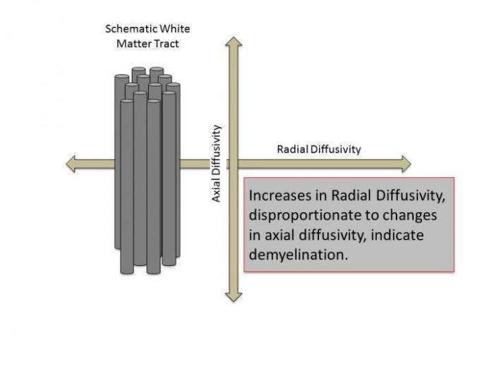 [Water Movement Relative to Nerve Fibers]