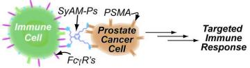 [Synthetic Molecules that Mimic Antibodies]