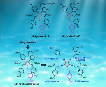 Synthesis of Marine Alkaloid, Dictyodendrin, Using Selective C-H Functionalization Strategies