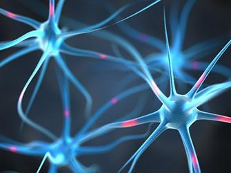 Networks of the brain reflect the individual gender identity