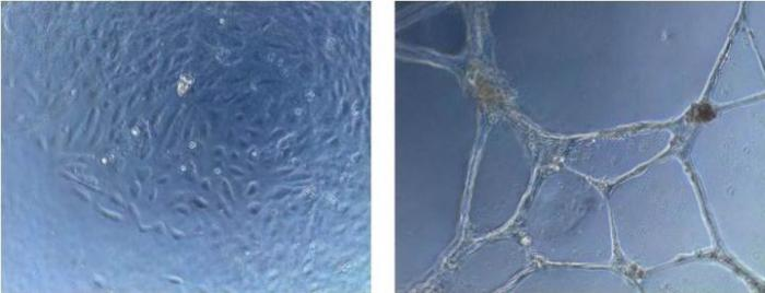 Antibodies in Action