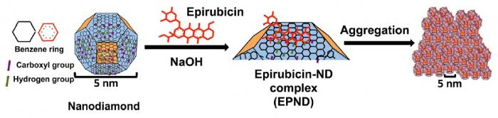 Schematic model showing surface and chemical structure of nanodiamond and Epirubicin